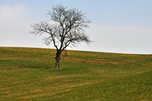 Lauschied im Frühjahr
